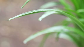 Plant foliage with raindrops stock footage
