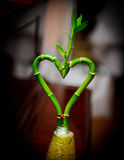Plant in the form of heart stock photography