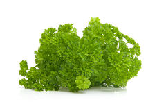Plant of fresh parsley Royalty Free Stock Photos
