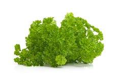 Plant of fresh parsley Royalty Free Stock Photos