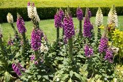 Plant, Fritillaria Stock Photos