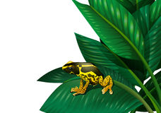 A plant with a frog Stock Image