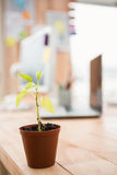 Plant in front of a creative working desk Royalty Free Stock Photography
