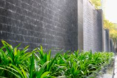 Plant in front of a waterfall. This unique image shows beautiful green plants in front of a water wall with stones. This photo was taken in Bangkok Thailand stock photography