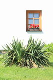 Plant in front a window Stock Image