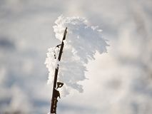 Plant with frost Royalty Free Stock Image