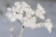 Plant with frost and ice Stock Photography