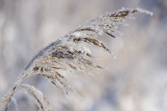 Plant with frost and ice Stock Image