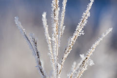 Plant with frost and ice Stock Photos