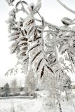 Plant in frost. Suddenly frozen plants in frost in late autumn stock photography