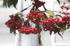 Plant. Fruit stock photos