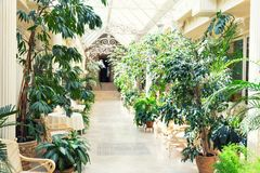 Plant gallery hall Royalty Free Stock Photography
