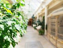 Plant gallery hall Stock Photos