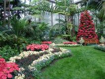 Plant, Garden, Botanical Garden, Flower royalty free stock image