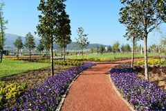 Plant, Garden, Flower, Field stock photography