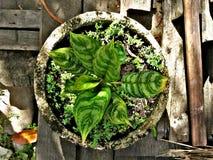 Plant in the garden Royalty Free Stock Photos