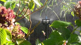 Garden irrigation with an automatic watering system stock footage
