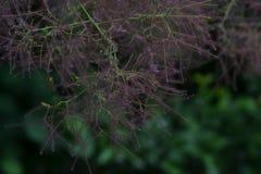 Plant in garden stock image