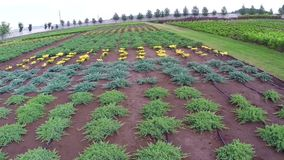 Plant garden plants good weather. Plantation of plants on a farm in Ukraine stock video footage