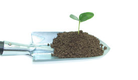 Plant on Garden trowel Royalty Free Stock Photography