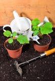 Plant gardener BIO Royalty Free Stock Photo