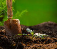 Plant and gardening tool against beautiful blur background in gr Stock Photos