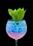 Plant in gel bolls Stock Photography
