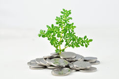 A plant germination in the coin Royalty Free Stock Photo