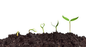 Plant germination and growth. Love for nature concept with heart shaped seedling Royalty Free Stock Photos