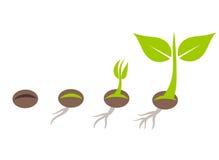 Plant germination Stock Image