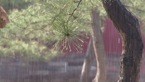 Beijing park with rain on plant. Plant getting rain on it in Beijing China stock video footage