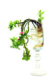 Plant in glass Royalty Free Stock Images