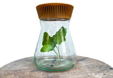 Plant in glass bottle with clipping path Royalty Free Stock Photography