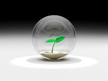 Plant in a glass sphere Stock Images