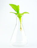 Plant in glass tube Royalty Free Stock Photography