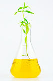 Plant and glass tube Royalty Free Stock Images