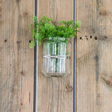 Plant in glass on wood panel Royalty Free Stock Photography