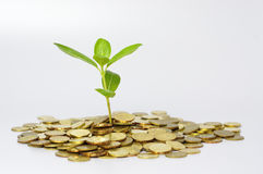 Plant and Gold Coins - Financial Concept Stock Photo