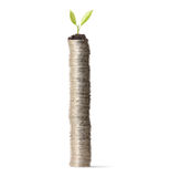 Plant on gold coins and graph them Stock Photo