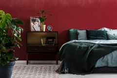 Dark red bedroom interior. Plant in gold pot on nightstand next to bed with emerald green bedding in dark red bedroom interior stock photos