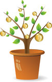 Plant with golden coins Stock Photo