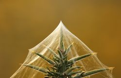 Plant with gossamer Stock Image