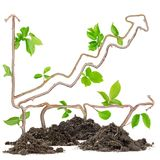 Plant graph. Plants growing from soil heaps forming graph with arrow pointing upwards Stock Image