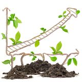 Plant graph Royalty Free Stock Images