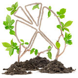 Plant Graph Stock Photo