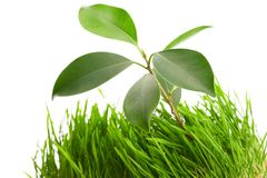 Plant in the  grass Royalty Free Stock Image