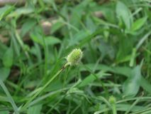 Plant, Grass, Flora, Grass Family royalty free stock image