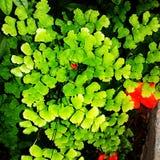 Plant. Green background  plant leaves  shrub Stock Image