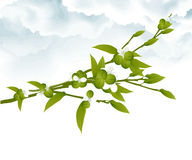 Plant with green berries stock illustration