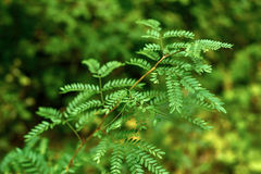 Plant in a green forest Stock Photography